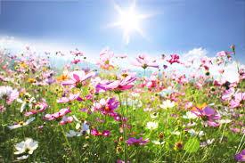 Il campo fiorito